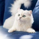 cats-wallpapers-9